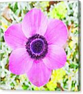 The Anemone Is So Pink Canvas Print