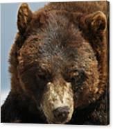 The Bear 2 Canvas Print
