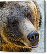 The Bear Head Shoot Canvas Print