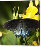 The Beauty Of A Butterfly  Canvas Print
