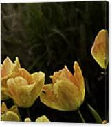The Beauty Of Spring Canvas Print