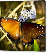 The Beauty Of The Queen  Canvas Print