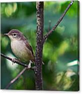 The Best Singer Of The Woods And Fields Canvas Print