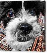 The Black And White Dog Canvas Print