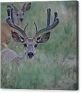 The Bucks Canvas Print