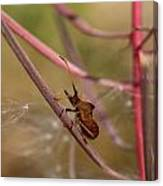 The Bug With Fireweed Seeds Canvas Print