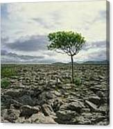 The Burren, On Kinvara Side, Co Clare Canvas Print
