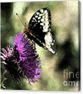 The Butterfly II Canvas Print