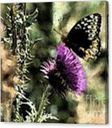 The Butterfly IIi Canvas Print