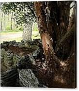 The Cedar Canvas Print