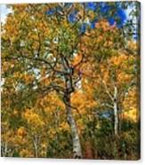 The Colors Of The Aspen Forest Canvas Print