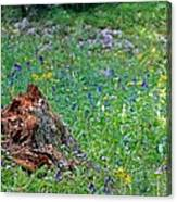 The Contrast Of Life And Decay Canvas Print
