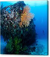 The Coral Encrusted Stern Canvas Print