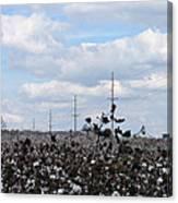 The Cotton Crops Of Limestone County Alabama Canvas Print