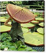 The Cut Pad Of A Victoria Amazonica Canvas Print