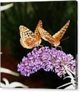 The Dancing Butterflies Canvas Print