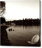 The Disinterested Goose And I  Canvas Print