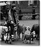 The Dog Walker Canvas Print