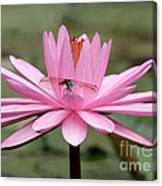 The Dragonfly And The Pink Water Lily Canvas Print