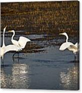 The Egrets Canvas Print