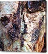 The Elephant Tree Canvas Print