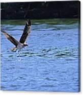 The Environmentalist Osprey Canvas Print