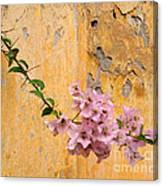 The Escaping Bougainvillea Canvas Print