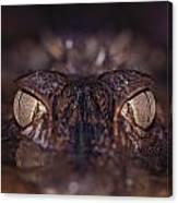 The Eyes Of A Crocodilian Canvas Print
