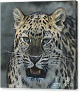 The Eyes Of A Jaguar Canvas Print