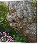 The Face In The Tree Canvas Print