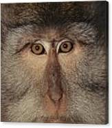 The Face Of A Long-tailed Macaque Canvas Print