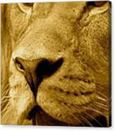 The Face Of God In Sepia Tones Canvas Print