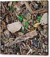 The Fallen Butterfly Wings Canvas Print