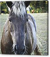 The Farmers Horse Canvas Print
