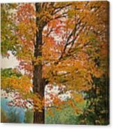 The Fay Tree Canvas Print