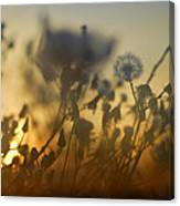 The Fire Of The Sun Canvas Print