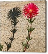 The Flower And Its Shadow Canvas Print