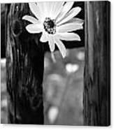 The Flower Bw Canvas Print