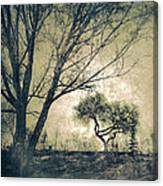The Forgetting Tree Canvas Print