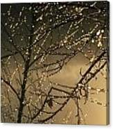 The Frozen Branches Of A Small Birch Canvas Print