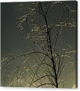 The Frozen Branches Of A Small Tree Canvas Print