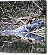 The Gator That Lives Under The Bridge Canvas Print
