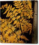 The Golden Fern Canvas Print