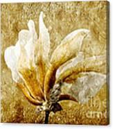 The Golden Magnolia Canvas Print