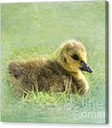 The Gosling Canvas Print