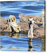 The Goslings Canvas Print