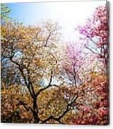 The Grandest Of Dreams - Cherry Blossoms - Brooklyn Botanic Garden Canvas Print