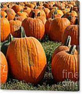 The Great Pumpkin Patch Canvas Print