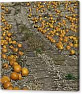 The Great Pumpkin Patch Trail Canvas Print