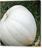 The Great White Pumpkin Canvas Print